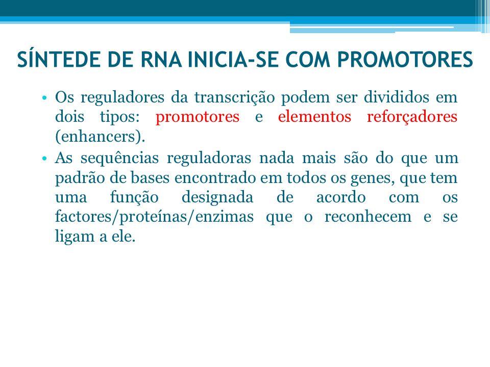 SÍNTEDE DE RNA INICIA-SE COM PROMOTORES