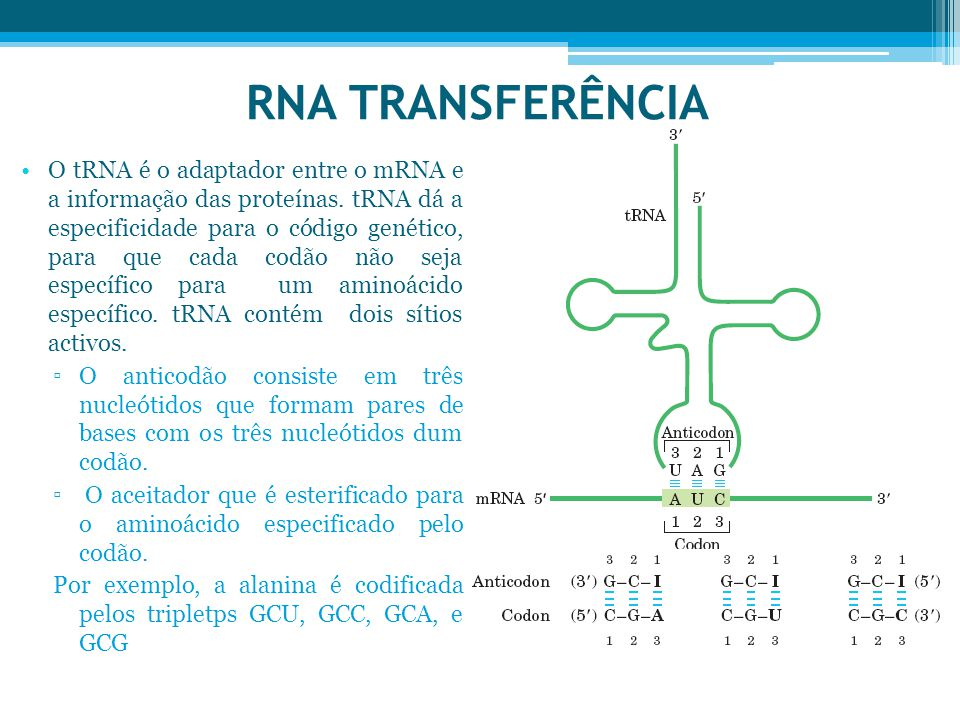 RNA TRANSFERÊNCIA
