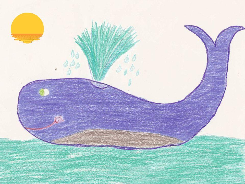 Dirigiram-se para o lugar Onde a baleia estava sozinha E descobriram uma maneira De a salvarem daquela aguinha…
