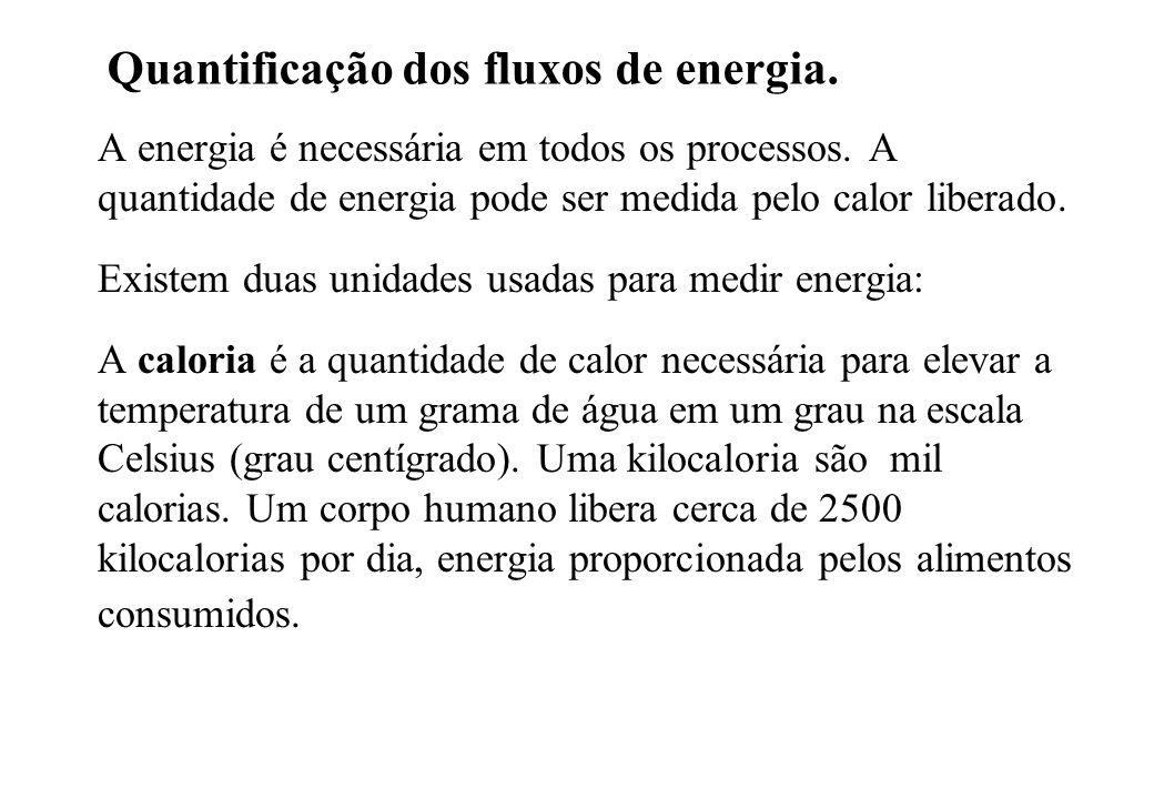 Quantificação dos fluxos de energia.