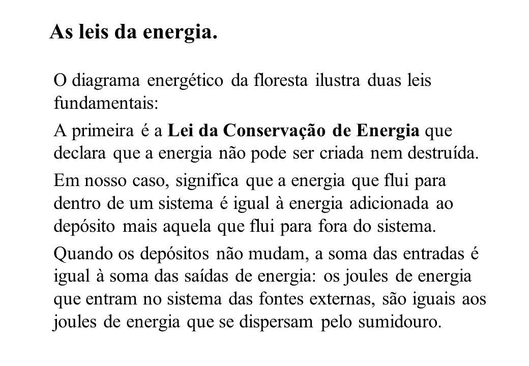 As leis da energia. O diagrama energético da floresta ilustra duas leis fundamentais: