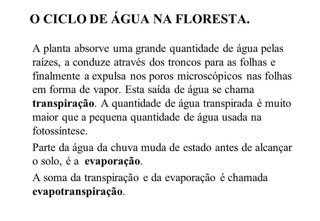 O CICLO DE ÁGUA NA FLORESTA.
