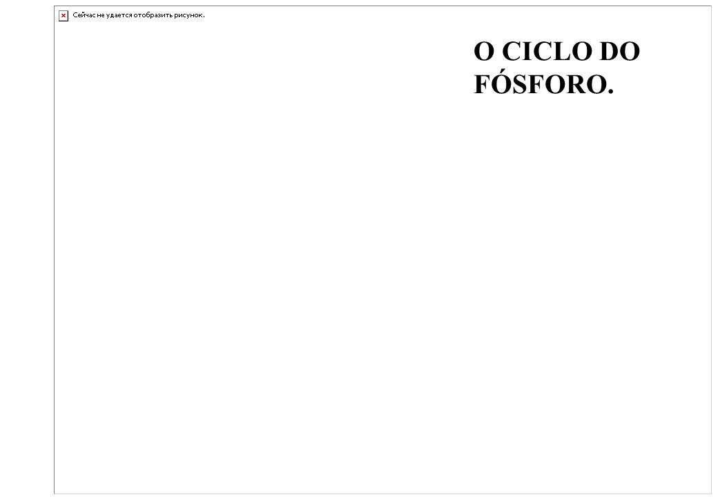 O CICLO DO FÓSFORO.