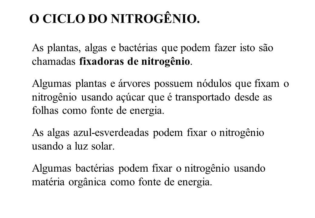 O CICLO DO NITROGÊNIO. As plantas, algas e bactérias que podem fazer isto são chamadas fixadoras de nitrogênio.