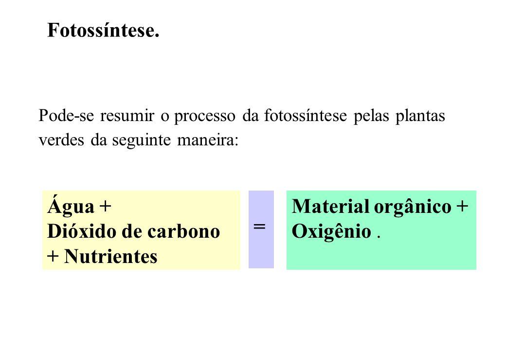 Água + Dióxido de carbono + Nutrientes =