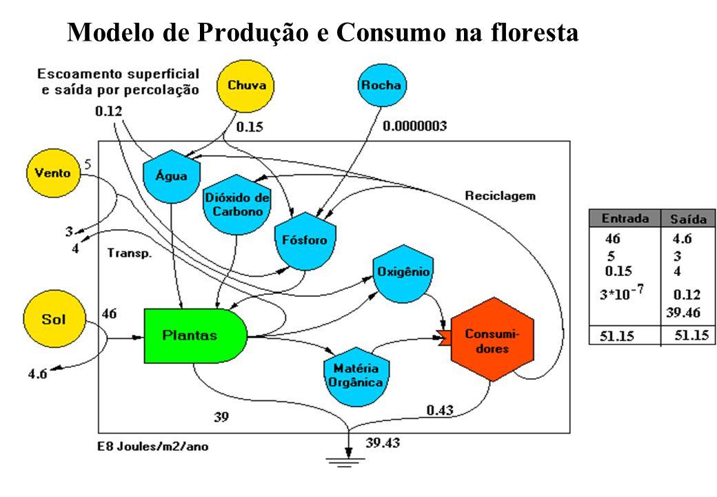Modelo de Produção e Consumo na floresta