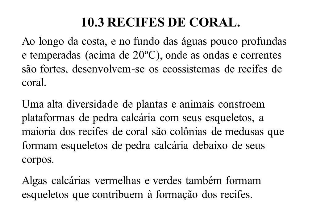 10.3 RECIFES DE CORAL.
