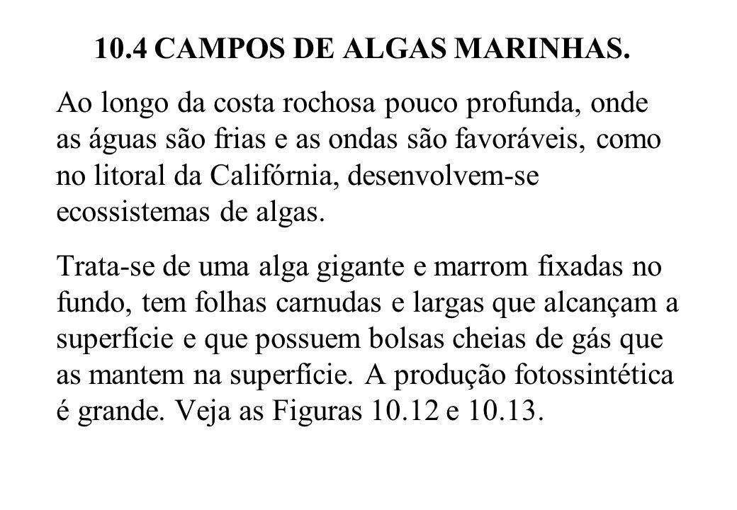 10.4 CAMPOS DE ALGAS MARINHAS.
