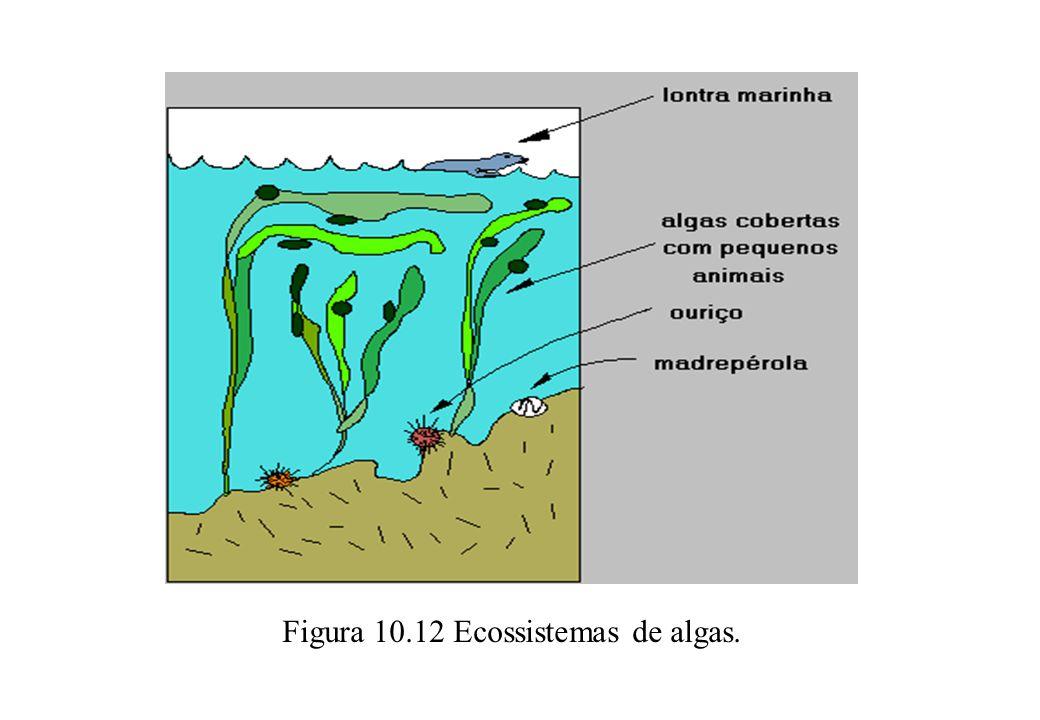 Figura 10.12 Ecossistemas de algas.