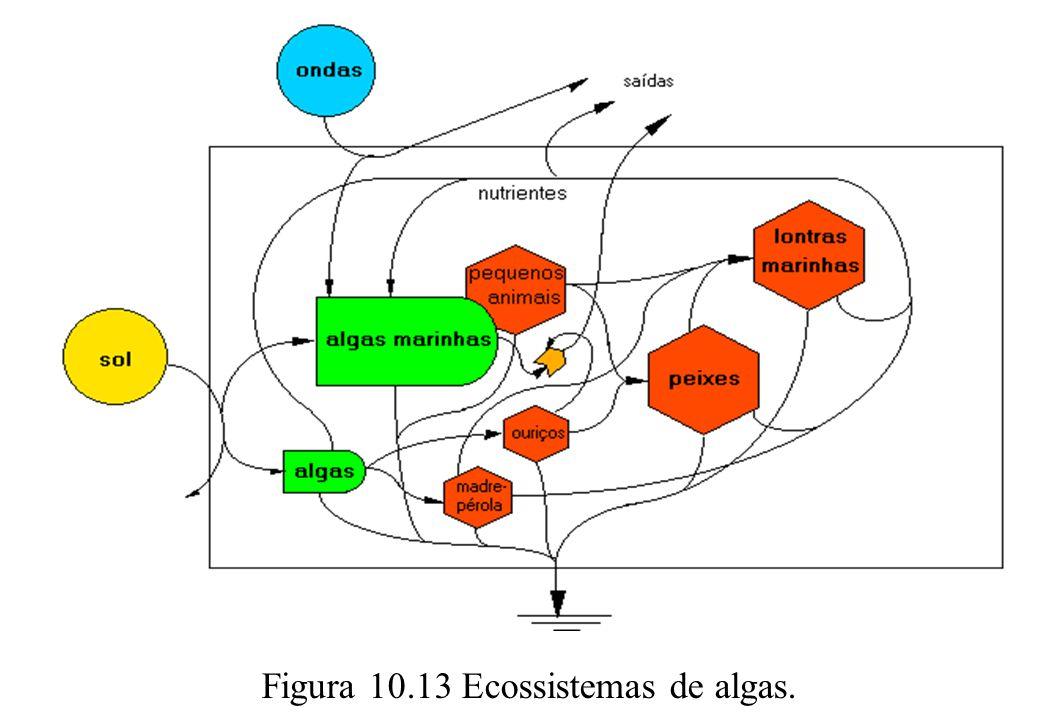 Figura 10.13 Ecossistemas de algas.