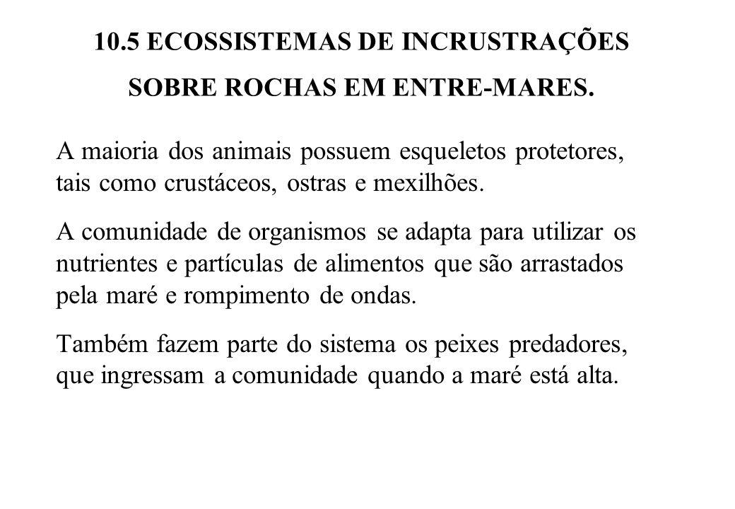 10.5 ECOSSISTEMAS DE INCRUSTRAÇÕES SOBRE ROCHAS EM ENTRE-MARES.
