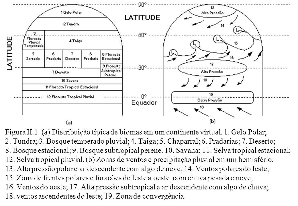 Figura II.1 (a) Distribuição típica de biomas em um continente virtual.