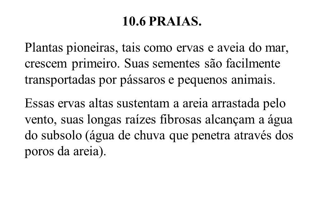 10.6 PRAIAS.