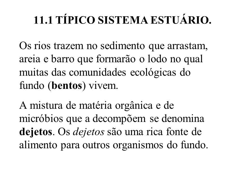 11.1 TÍPICO SISTEMA ESTUÁRIO.