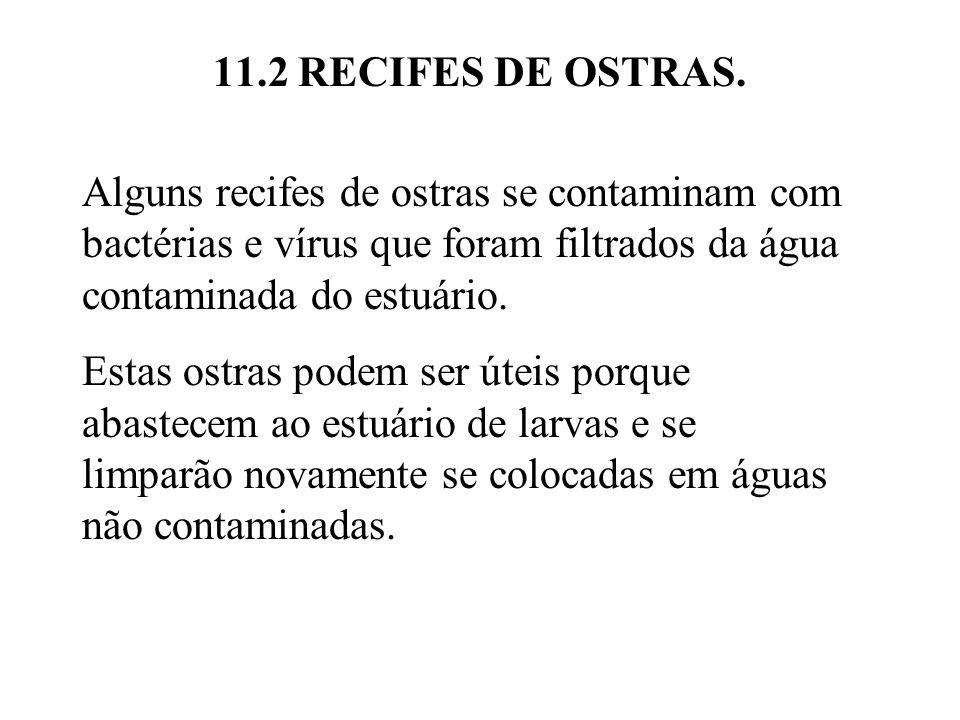 11.2 RECIFES DE OSTRAS. Alguns recifes de ostras se contaminam com bactérias e vírus que foram filtrados da água contaminada do estuário.
