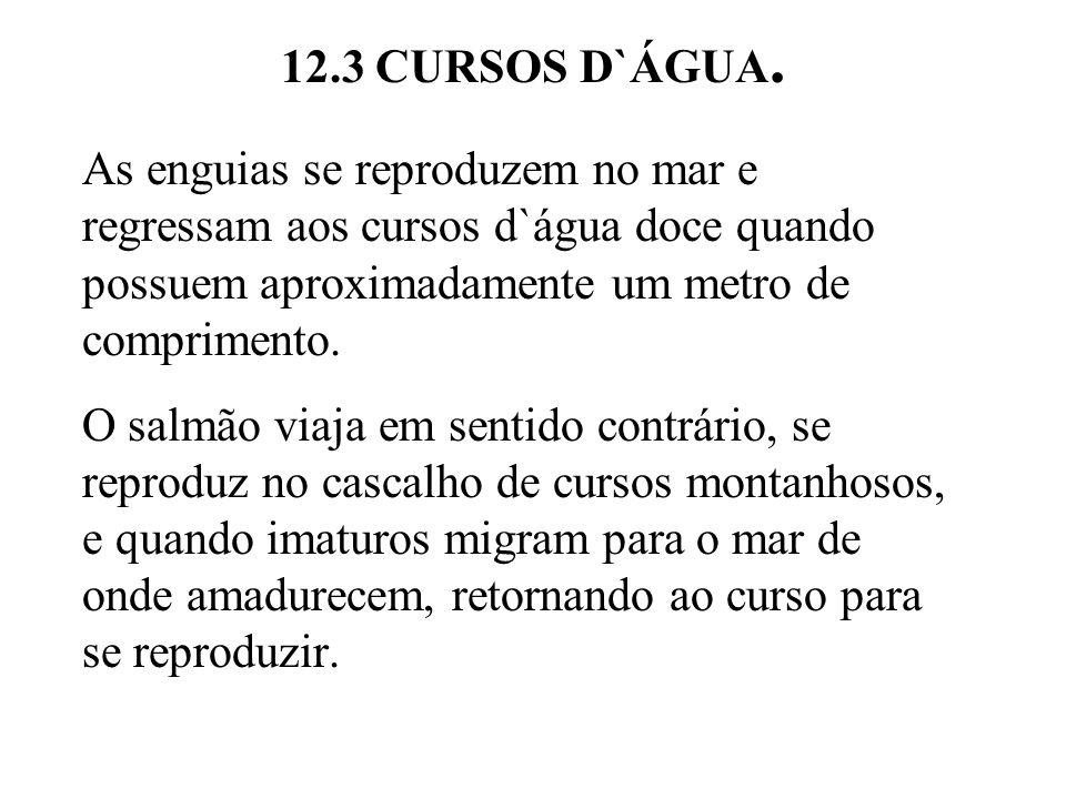 12.3 CURSOS D`ÁGUA. As enguias se reproduzem no mar e regressam aos cursos d`água doce quando possuem aproximadamente um metro de comprimento.