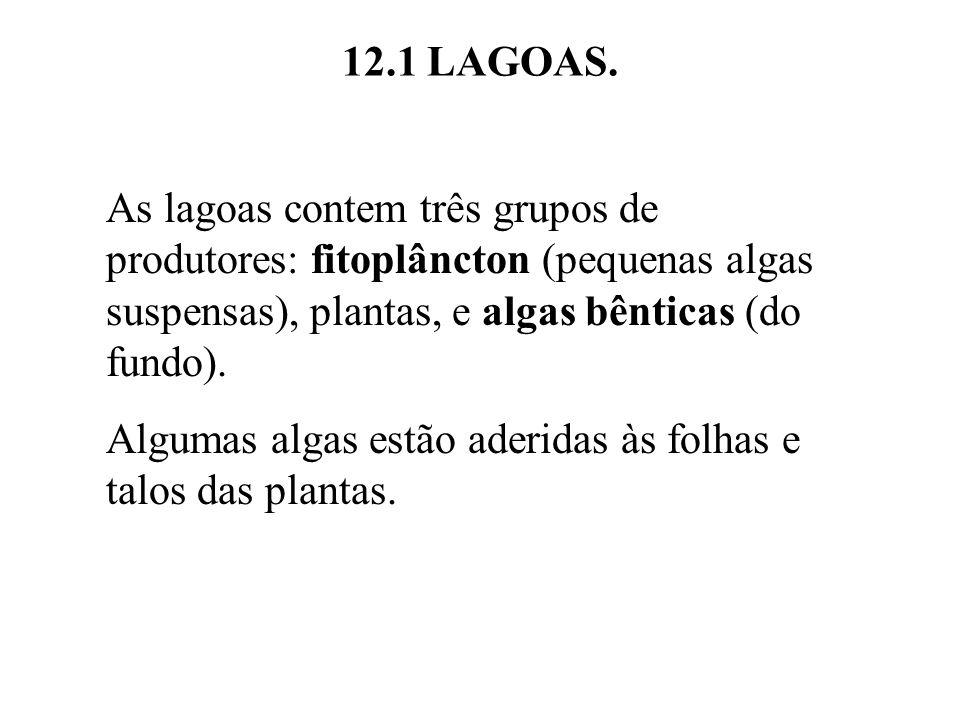 12.1 LAGOAS. As lagoas contem três grupos de produtores: fitoplâncton (pequenas algas suspensas), plantas, e algas bênticas (do fundo).