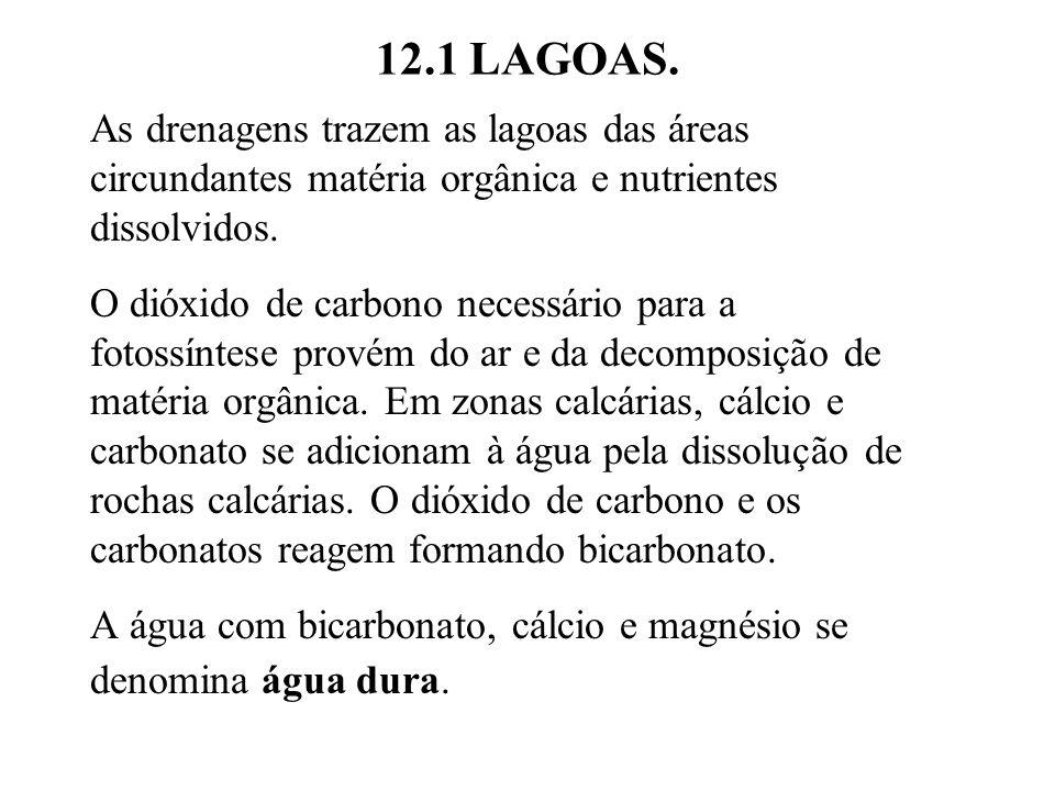12.1 LAGOAS. As drenagens trazem as lagoas das áreas circundantes matéria orgânica e nutrientes dissolvidos.