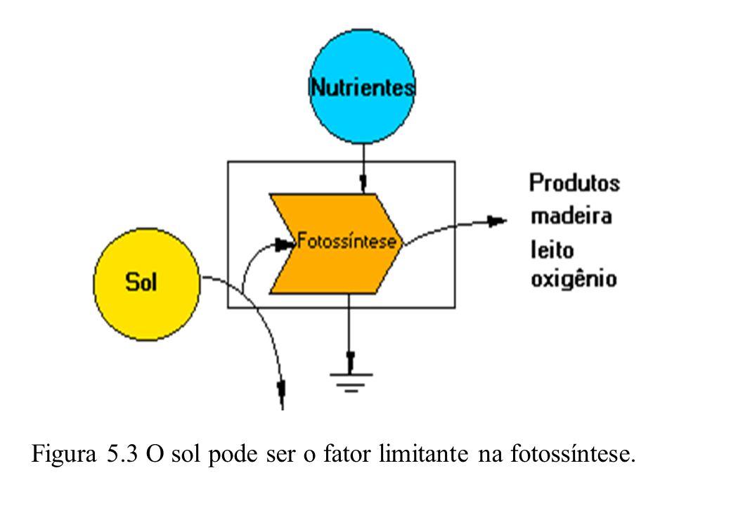Figura 5.3 O sol pode ser o fator limitante na fotossíntese.