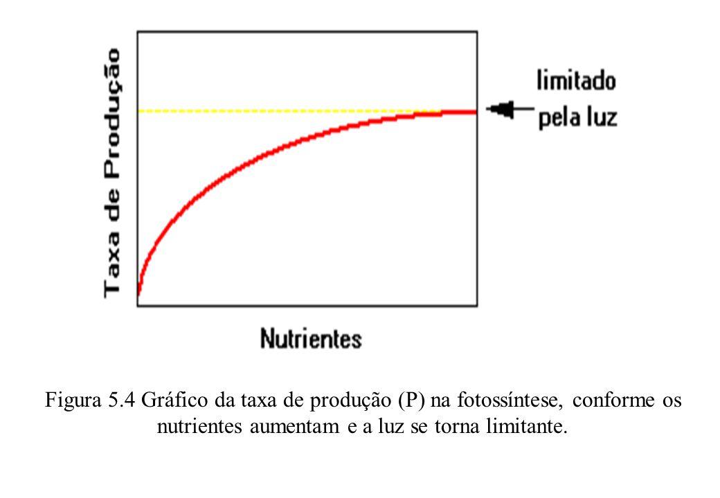 Figura 5.4 Gráfico da taxa de produção (P) na fotossíntese, conforme os nutrientes aumentam e a luz se torna limitante.