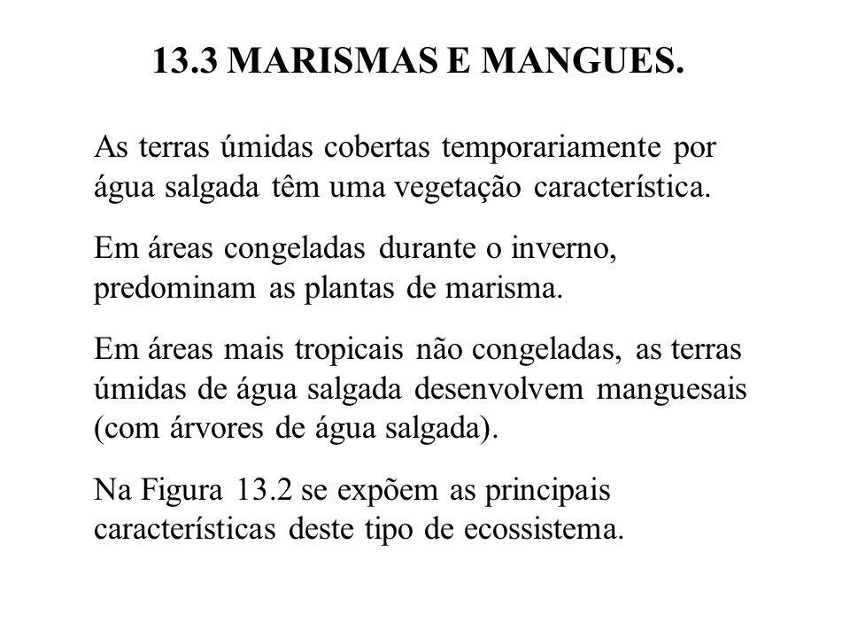 13.3 MARISMAS E MANGUES. As terras úmidas cobertas temporariamente por água salgada têm uma vegetação característica.