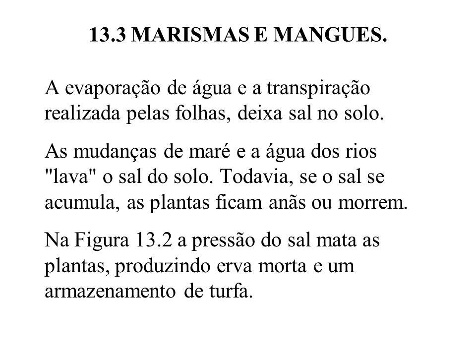 13.3 MARISMAS E MANGUES. A evaporação de água e a transpiração realizada pelas folhas, deixa sal no solo.