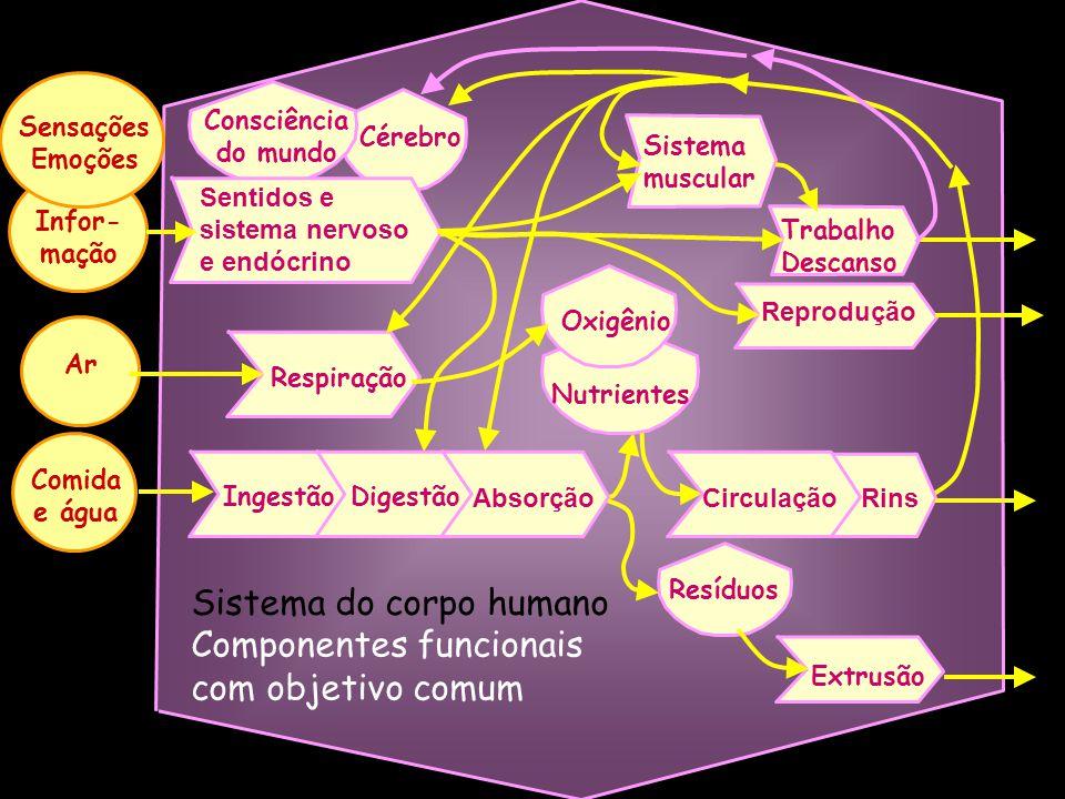 Sistema do corpo humano Componentes funcionais com objetivo comum