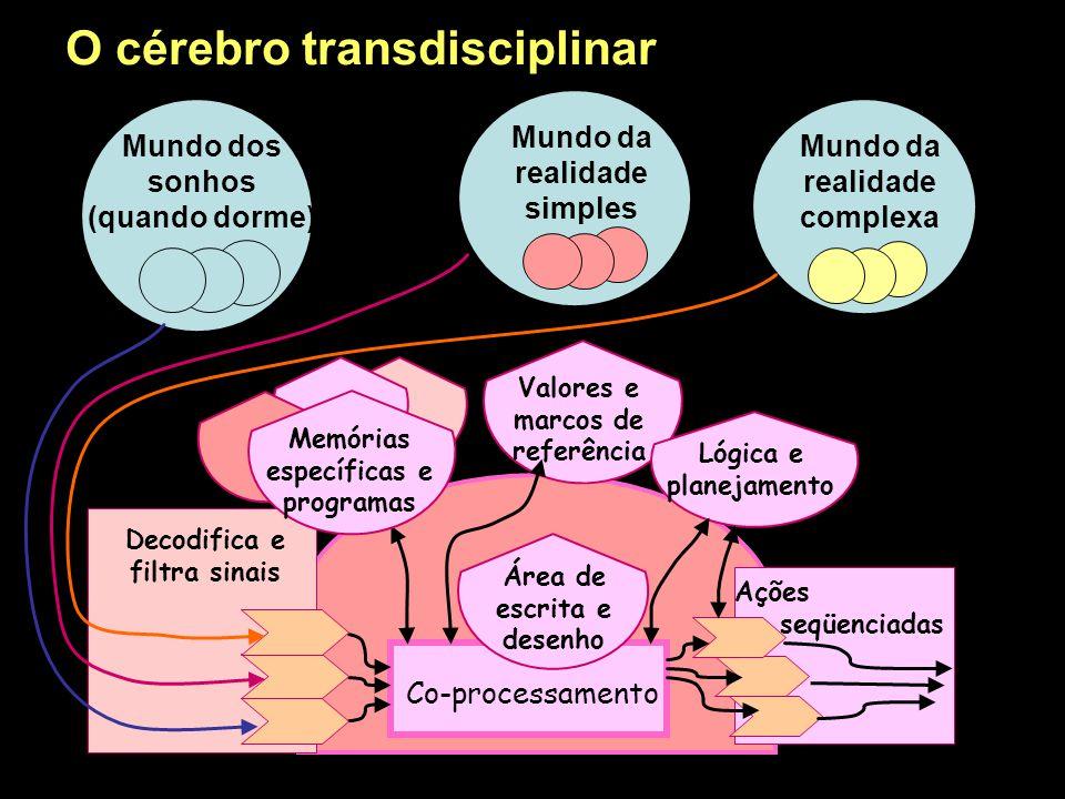 O cérebro transdisciplinar