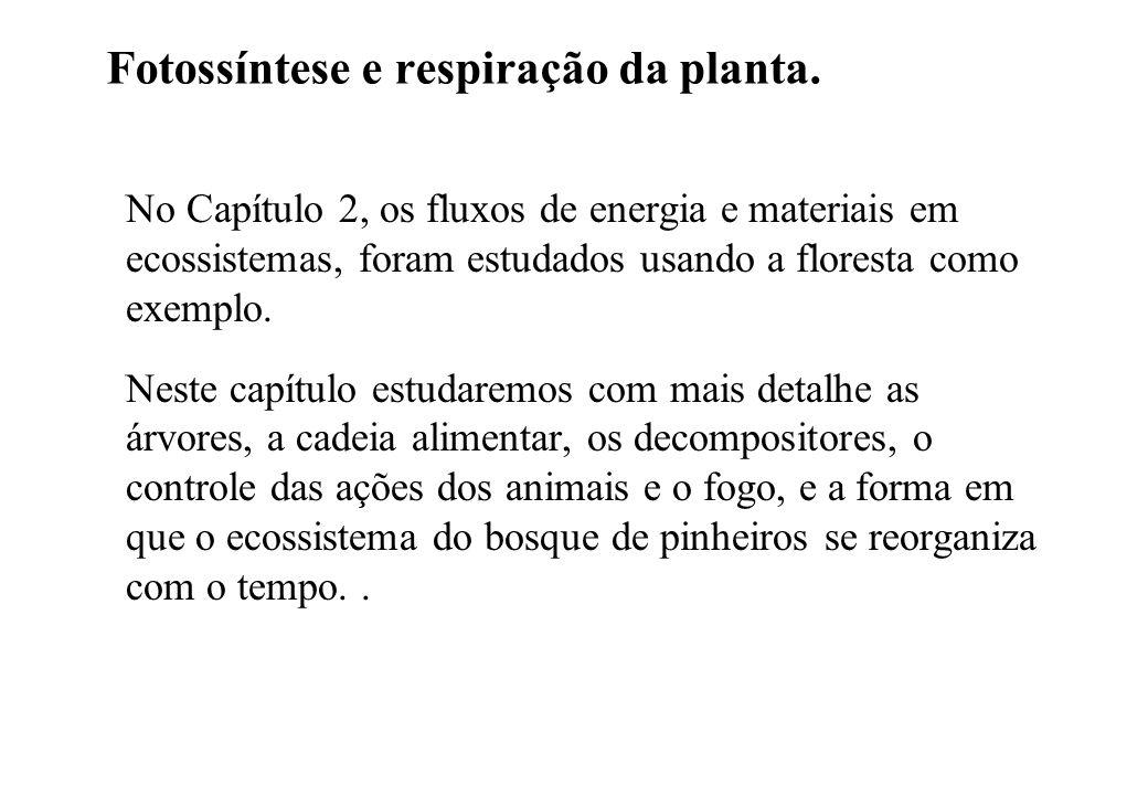 Fotossíntese e respiração da planta.