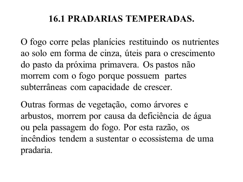 16.1 PRADARIAS TEMPERADAS.