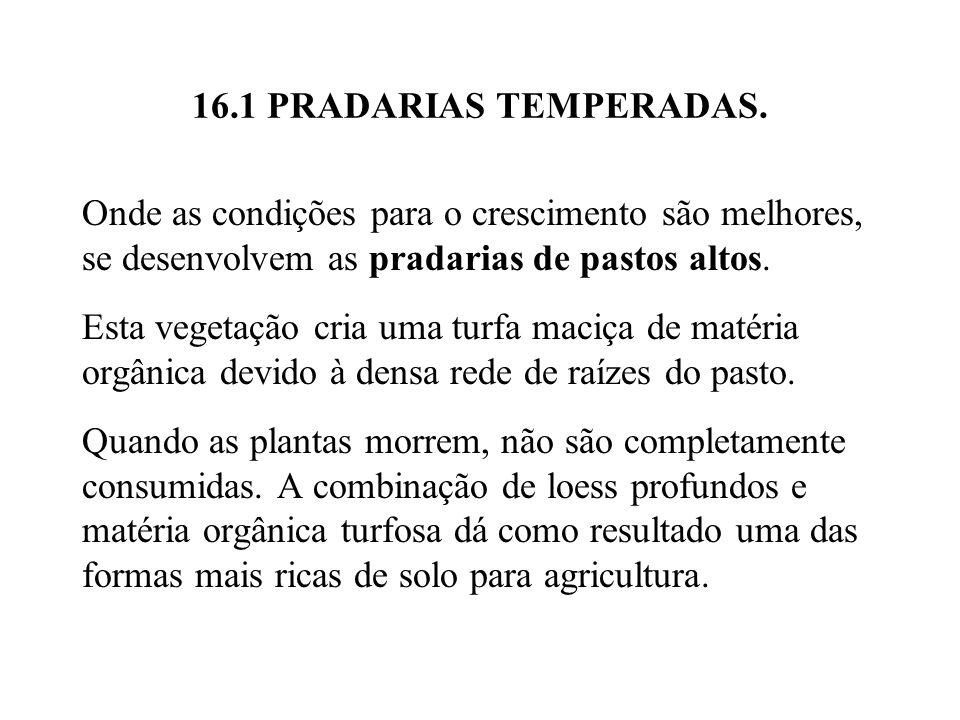 16.1 PRADARIAS TEMPERADAS. Onde as condições para o crescimento são melhores, se desenvolvem as pradarias de pastos altos.