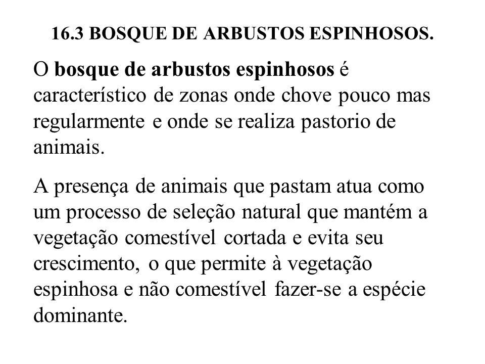 16.3 BOSQUE DE ARBUSTOS ESPINHOSOS.