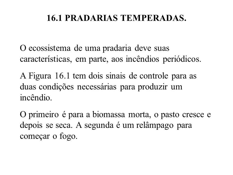 16.1 PRADARIAS TEMPERADAS. O ecossistema de uma pradaria deve suas características, em parte, aos incêndios periódicos.