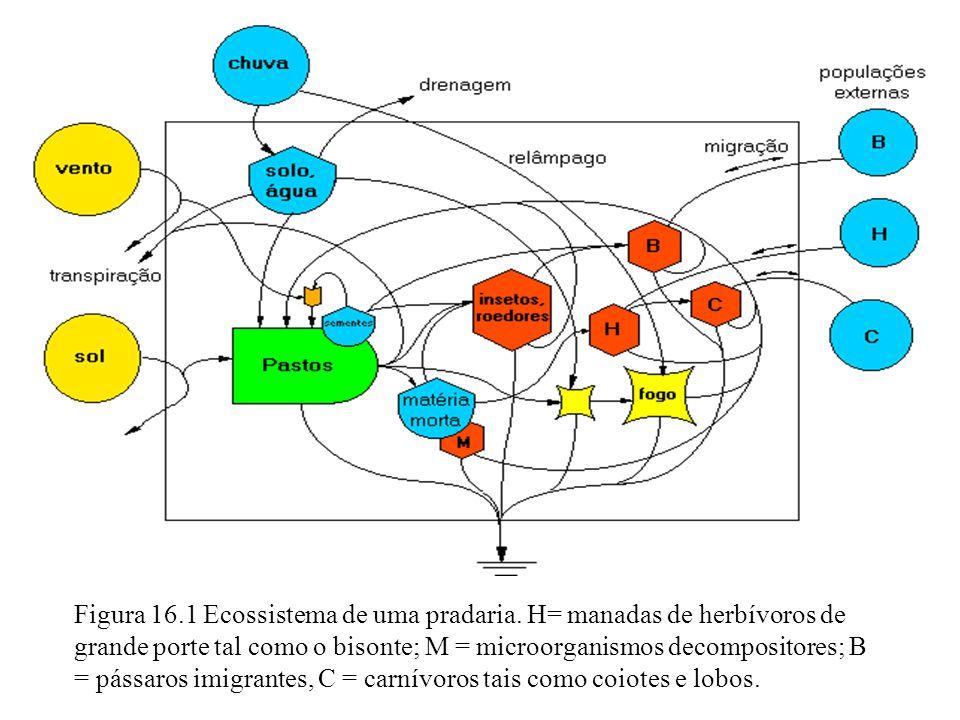 Figura 16. 1 Ecossistema de uma pradaria