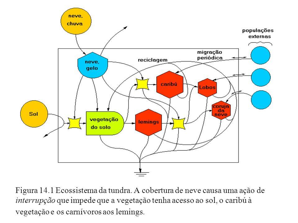 Figura 14. 1 Ecossistema da tundra