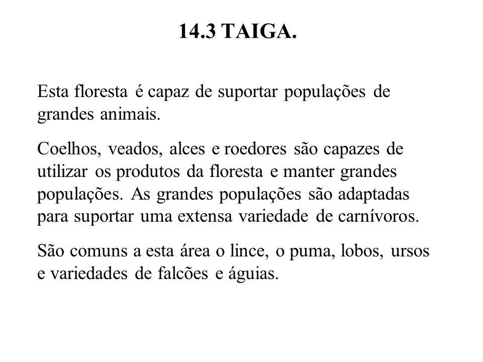 14.3 TAIGA. Esta floresta é capaz de suportar populações de grandes animais.