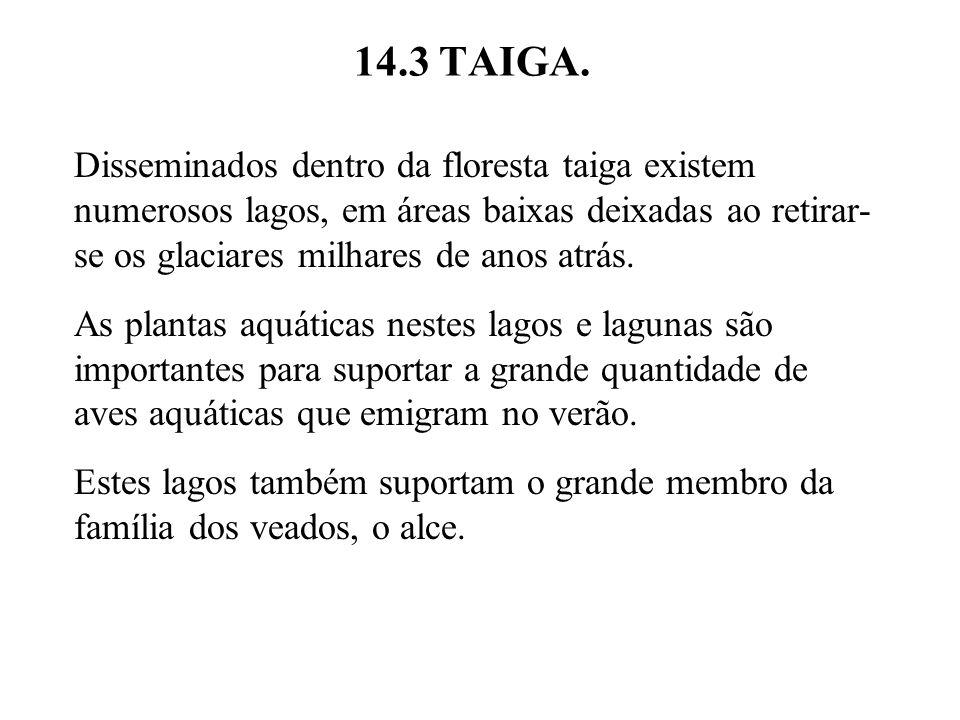 14.3 TAIGA.