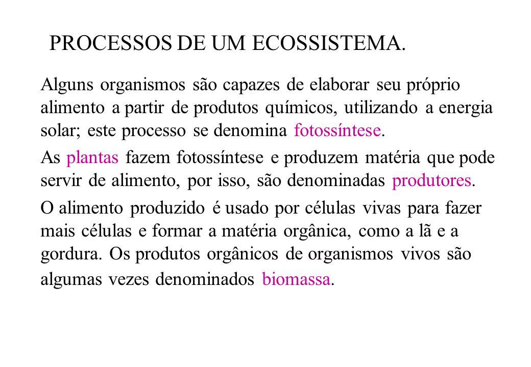 PROCESSOS DE UM ECOSSISTEMA.
