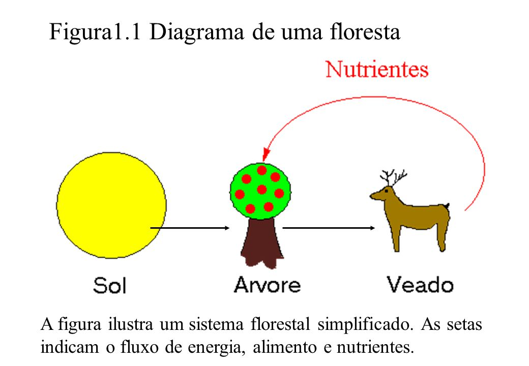 Figura1.1 Diagrama de uma floresta