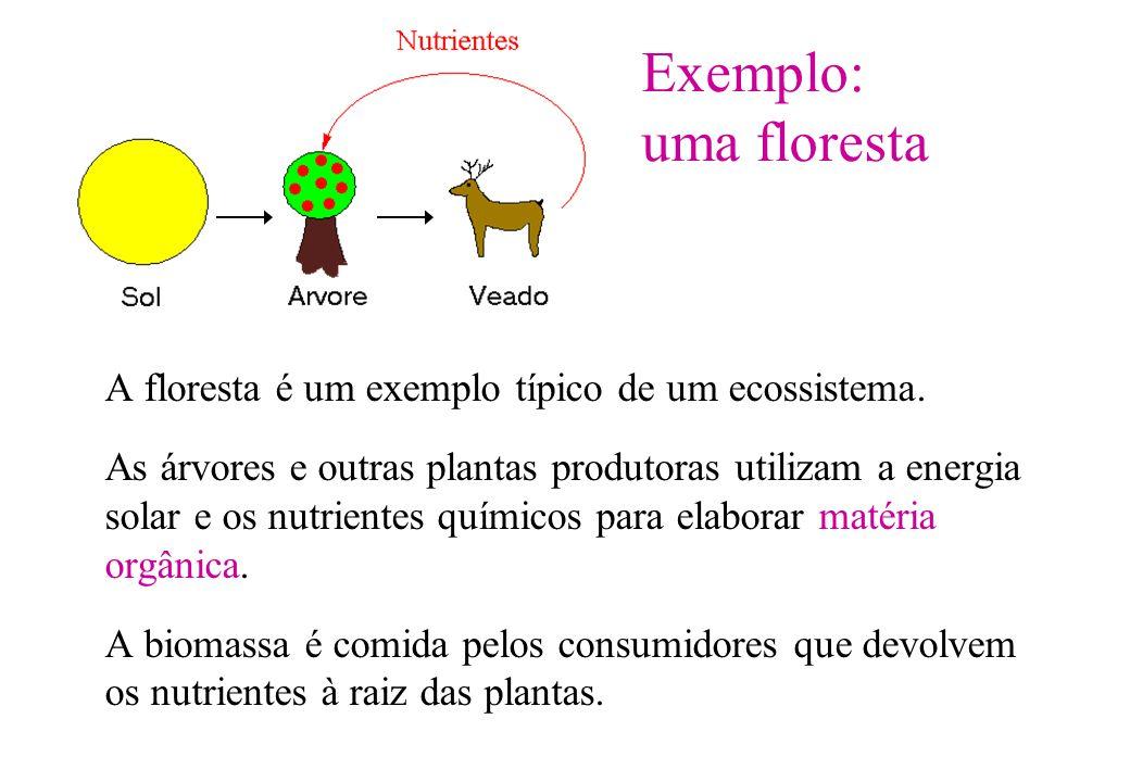 Exemplo: uma floresta A floresta é um exemplo típico de um ecossistema.