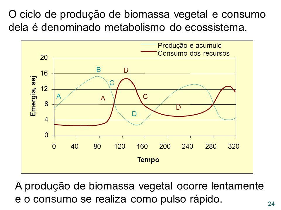 O ciclo de produção de biomassa vegetal e consumo dela é denominado metabolismo do ecossistema.