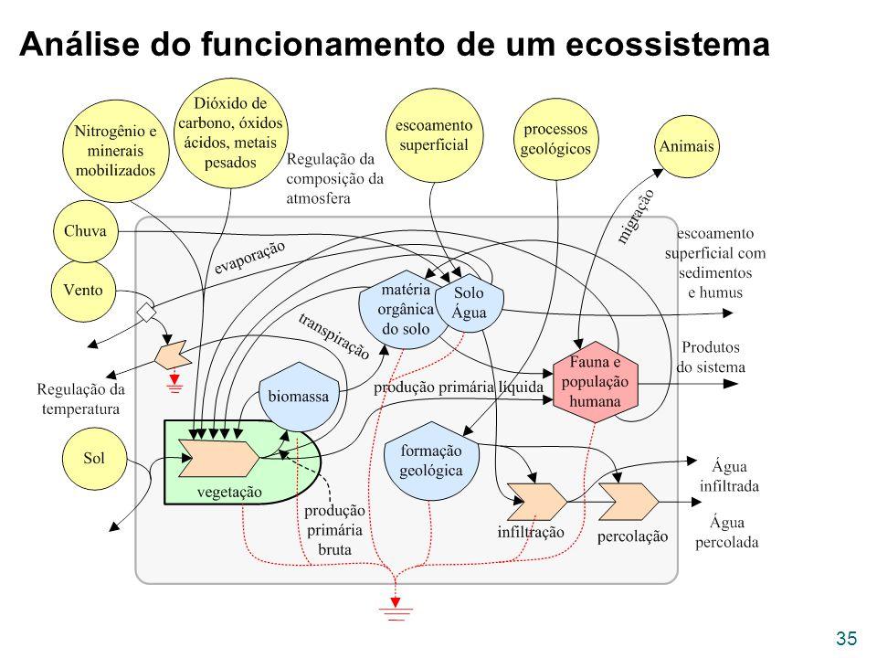 Análise do funcionamento de um ecossistema