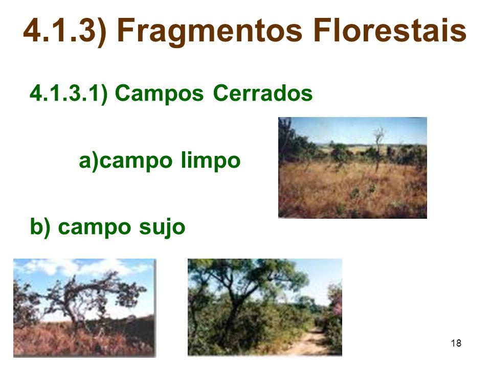 4.1.3) Fragmentos Florestais