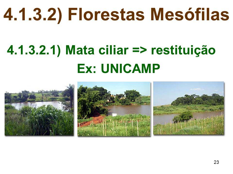 4.1.3.2) Florestas Mesófilas 4.1.3.2.1) Mata ciliar => restituição
