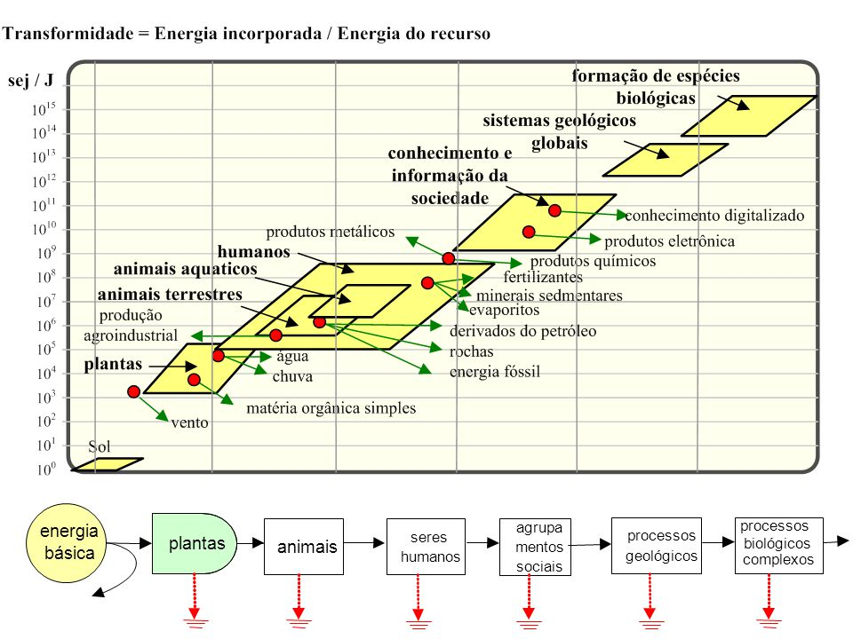 energia plantas animais básica agrupa seres processos biológicos