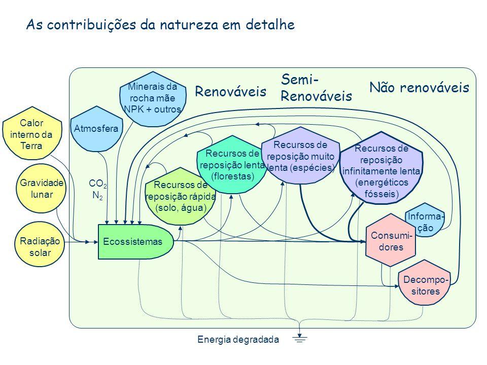 As contribuições da natureza em detalhe