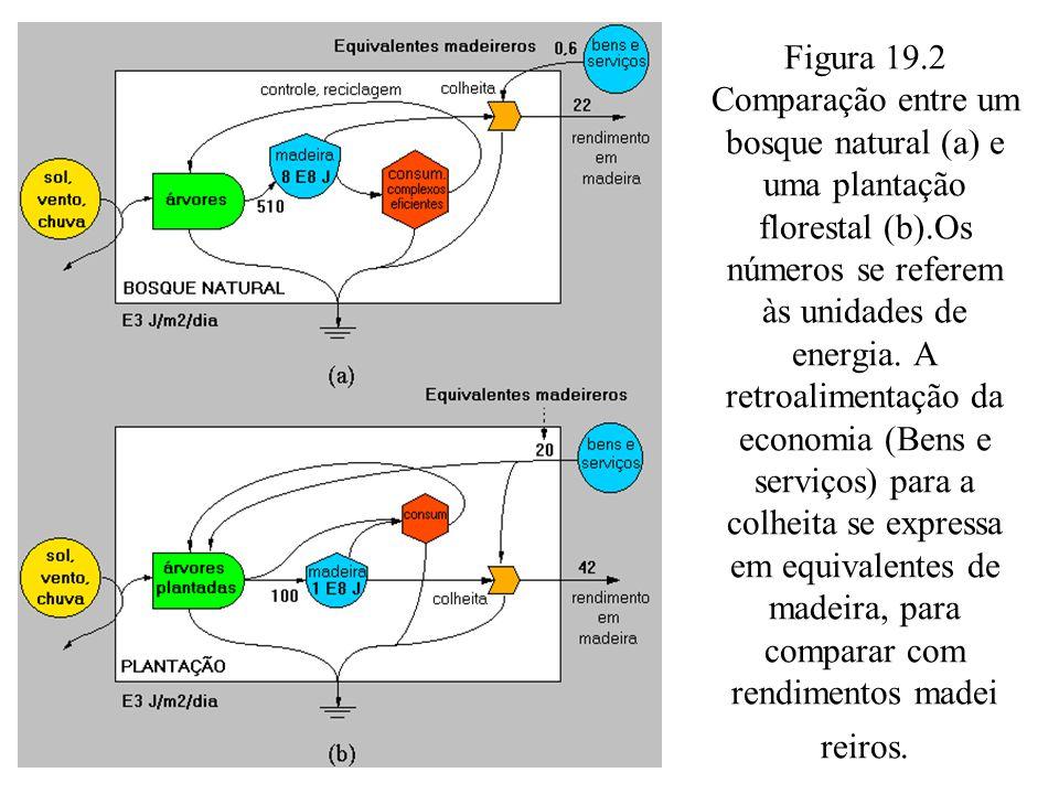 Figura 19.2 Comparação entre um bosque natural (a) e uma plantação florestal (b).Os números se referem às unidades de energia.