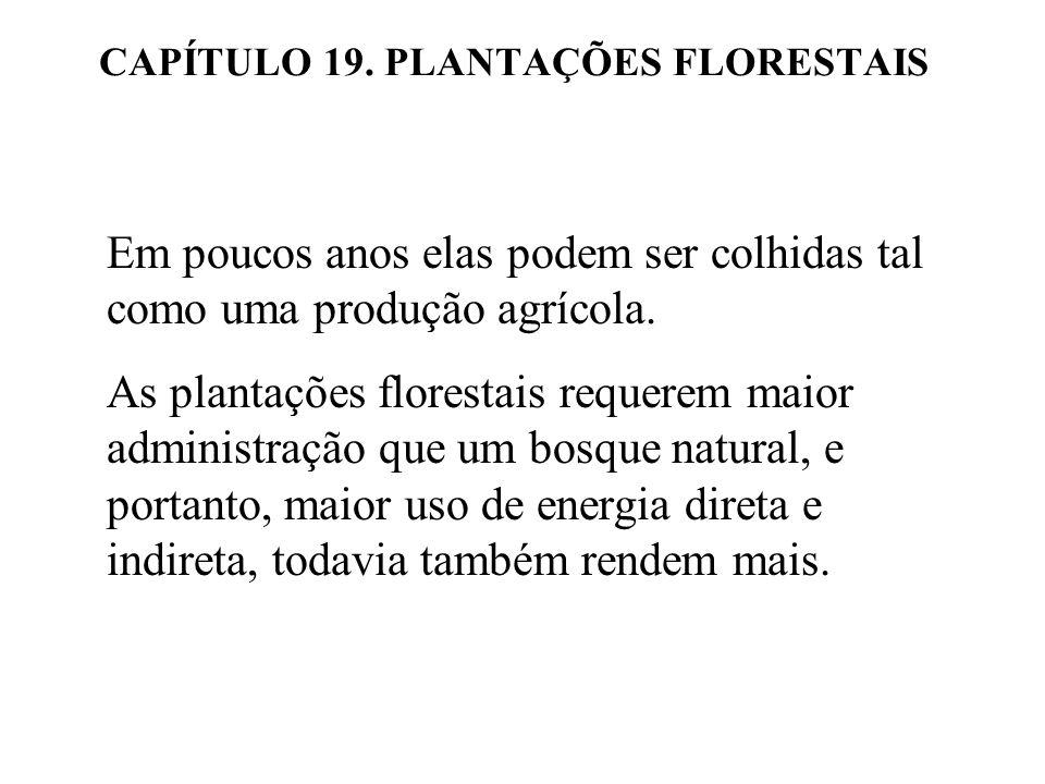 CAPÍTULO 19. PLANTAÇÕES FLORESTAIS