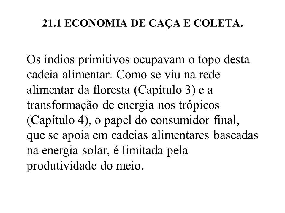 21.1 ECONOMIA DE CAÇA E COLETA.