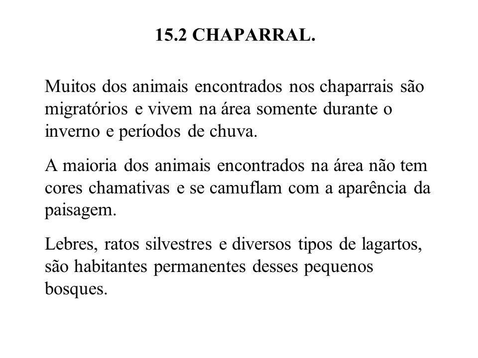 15.2 CHAPARRAL. Muitos dos animais encontrados nos chaparrais são migratórios e vivem na área somente durante o inverno e períodos de chuva.